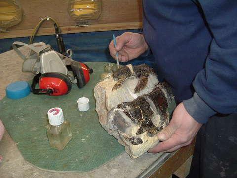 Plesiosaur Vertebra being prepped (480x360, 22110)